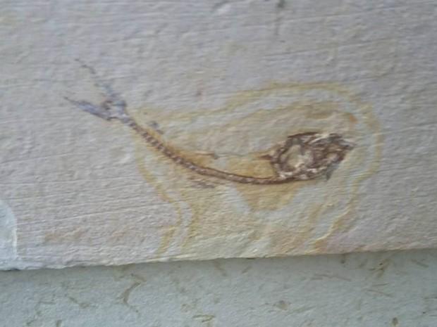peixenapedra